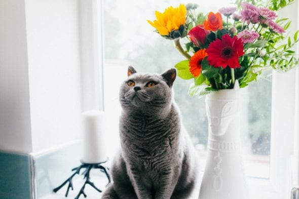 ten things every cat parent should remember