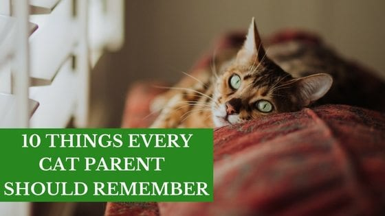 ten things every ct parent should remember