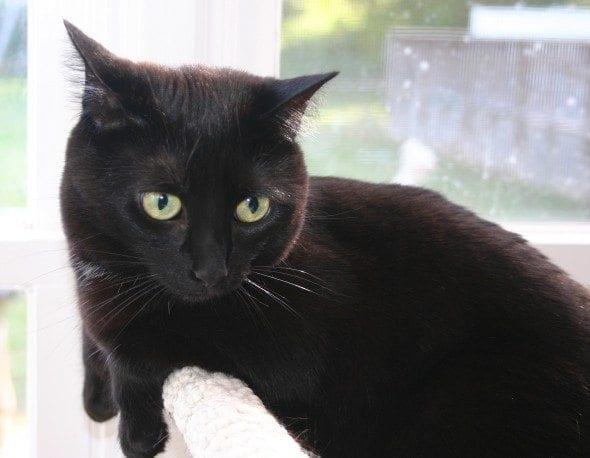 black cat on cat tree