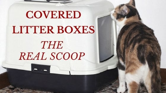 Covered Litter Boxes: The Real Scoop