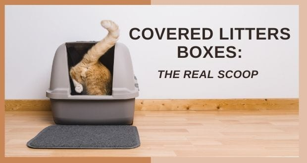covered litter boxes