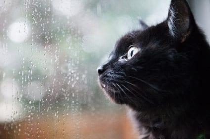 Cat in the rain textual analysis essay