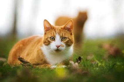An indoor litter box for your outdoor indoor cat for Having an indoor cat