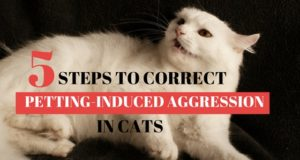 five steps to correct petting-induced aggression in cats