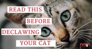read-this-before-declawing-your-cat