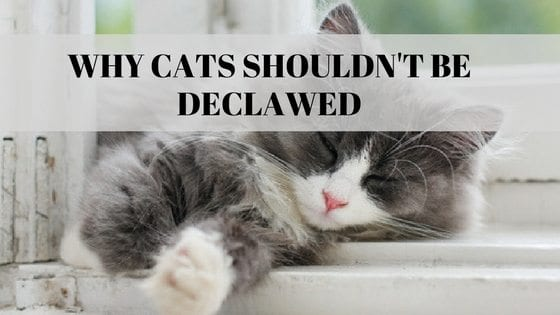 Read This Important Information Before Declawing Your Cat