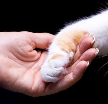 human holding a cat's paw
