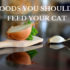9 foods you shouldn't feed your cat