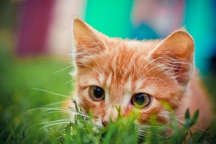 Fotolia 46212726 XS Teach Your Kitten to Enjoy Being Touched