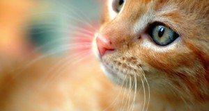 organge kitten