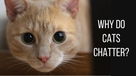 what can you use to deter cats from spraying
