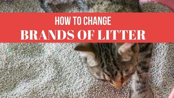 Changing Cat Litter Type For Cats