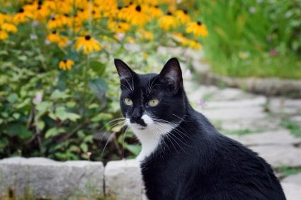 black and white cat sitting outdoors