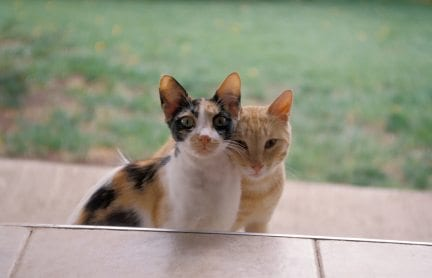 two outdoor cats