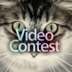 """My Cat's Story"" Video Contest Winner Announced"