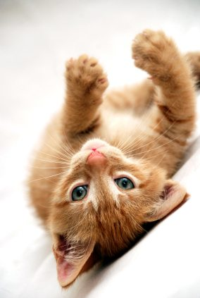 playful kitten on his back