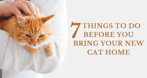 seven things to do before you bring your new cat home
