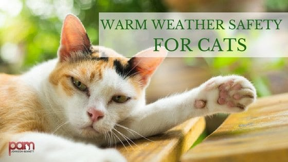 warm weather safety for cats