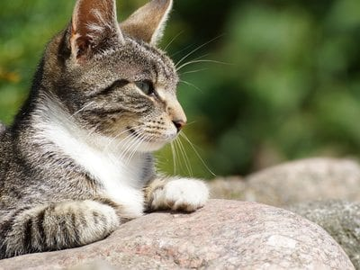 How To Keep Fleas Off Outdoor Cats
