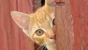 solving cat behavior problems