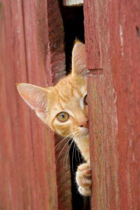 iStock 000000826314XSmall The Must Have Checklist for Solving Your Cats Behavior Problem