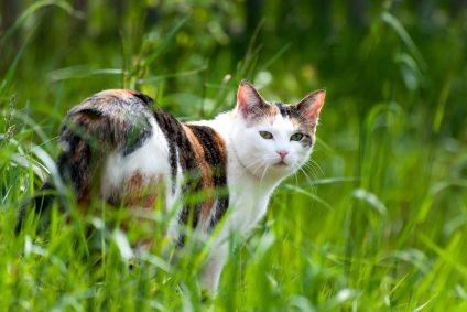 cat in tall grass