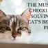 must have checklist for solving your cat's behavior problem