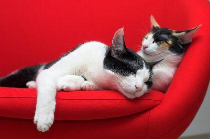 Cat behavior: cats sleeping