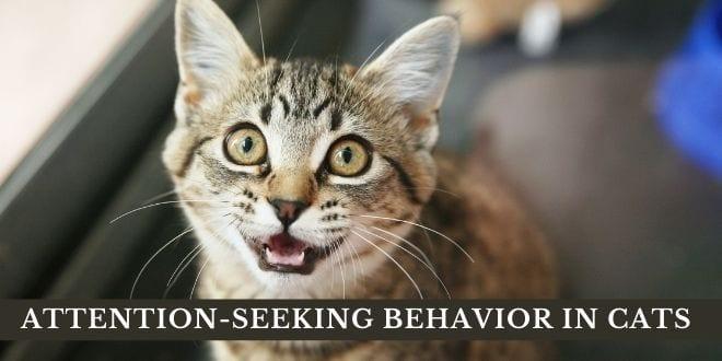 attention seeking behavior in cats