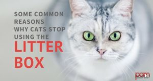 some common reasons why cats stop using the litter box