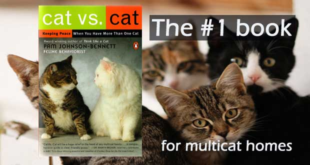 catvscatwebsiteslider How Many Litter Boxes Should You Have?
