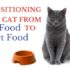 transitioning your cat from dry food to wet food