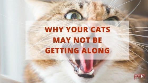litter training cats stray