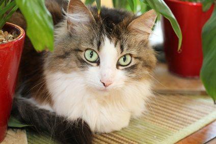 Fotolia 53811249 XS New Feline Vaccination Guidelines