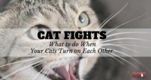 cat fights: what to do when your cats turn on each other