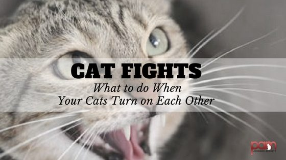 How to make my cats stop fighting