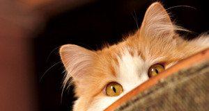 cat peeking over top of furniture