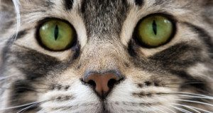 cat face with green eyes
