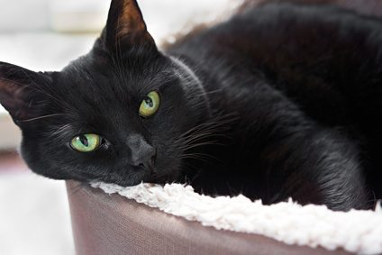 Cat Sitting In Litter Box For Long Time