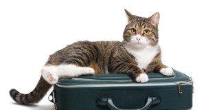 cat sitting on suitcase