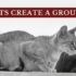 how cats create a group scent