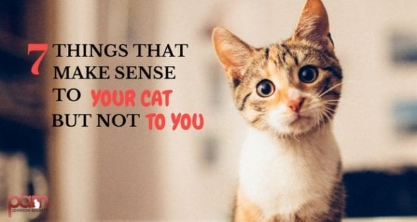 7 things that make sense to your cat but not to you