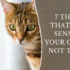 y things that make sense to your cat but not to you