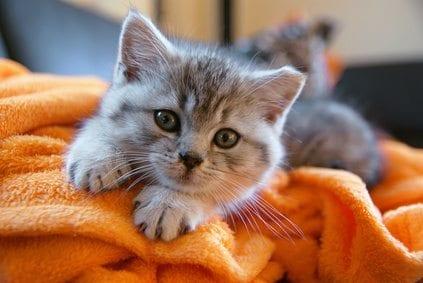 kitten on a blanket