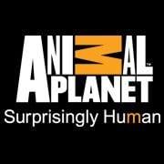 Psycho Kitty on Animal Planet UK
