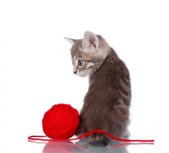 Can Cat Play With Ball Of Yarn