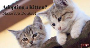 adopting a kitten? make it a double
