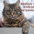 reduce your cat's stress during veterinary exams