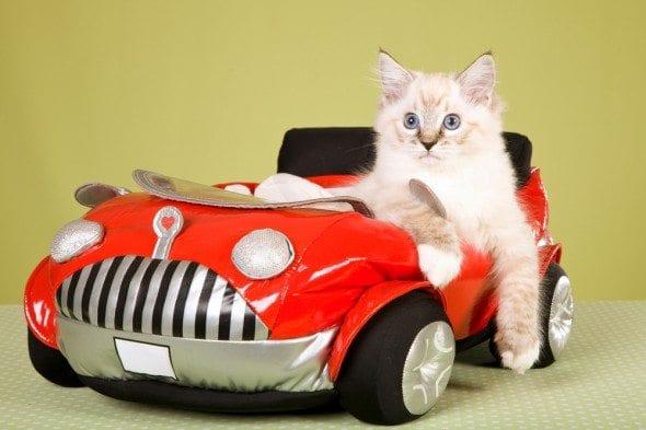 cat in toy car