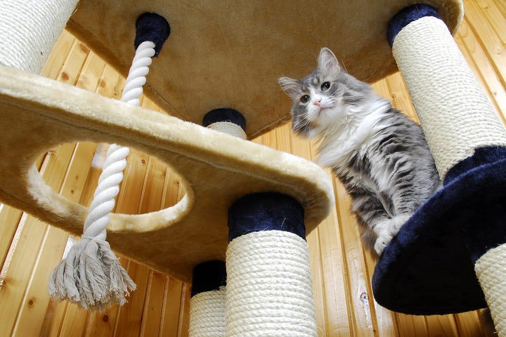 cat in cat tree